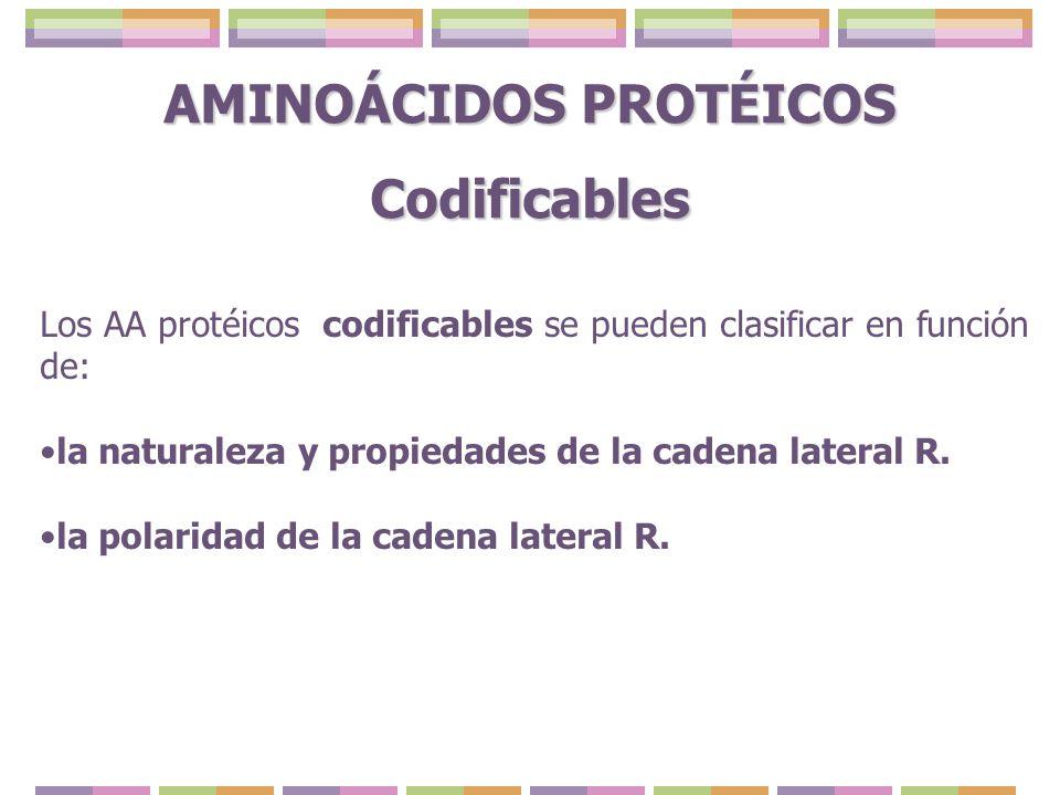 AMINOÁCIDOS PROTÉICOS Codificables Los AA protéicos codificables se pueden clasificar en función de: la naturaleza y propiedades de la cadena lateral