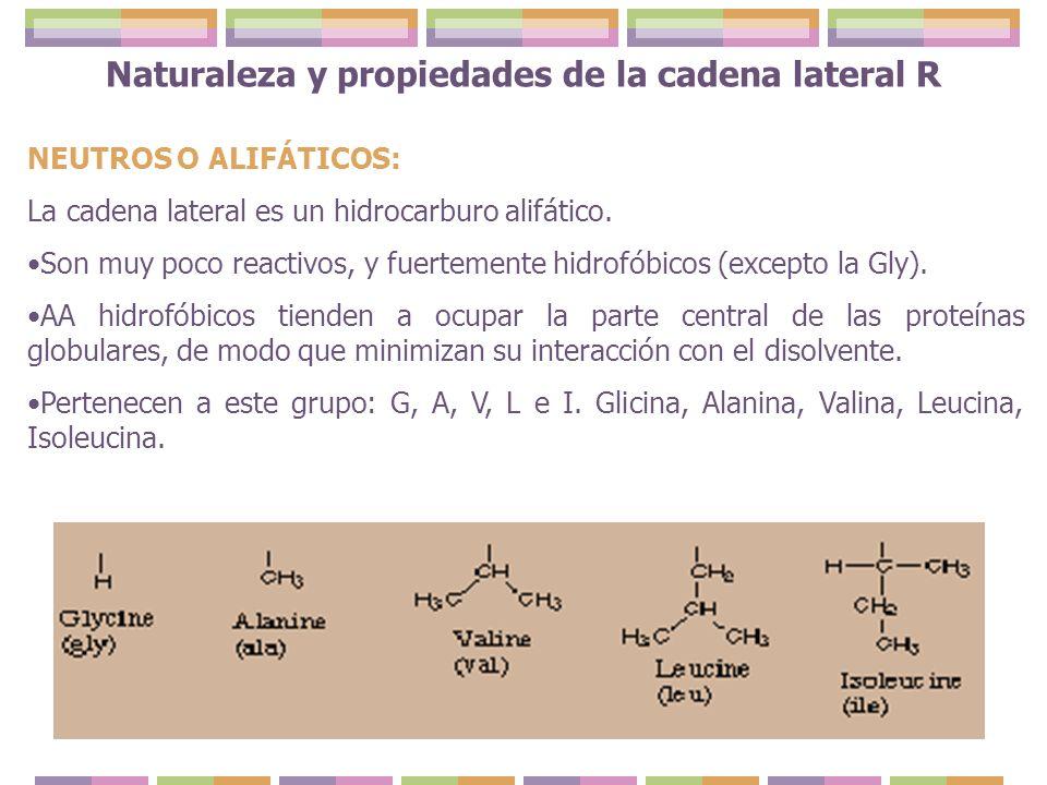 Naturaleza y propiedades de la cadena lateral R NEUTROS O ALIFÁTICOS: La cadena lateral es un hidrocarburo alifático. Son muy poco reactivos, y fuerte