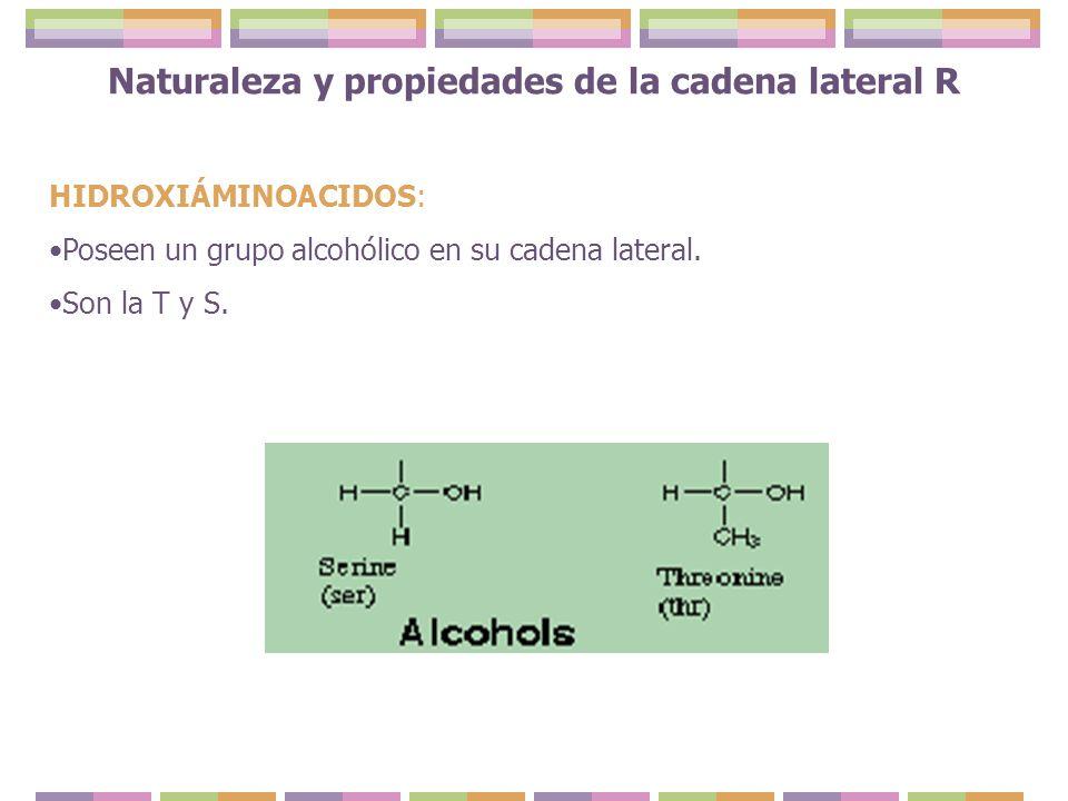 HIDROXIÁMINOACIDOS: Poseen un grupo alcohólico en su cadena lateral. Son la T y S. Naturaleza y propiedades de la cadena lateral R