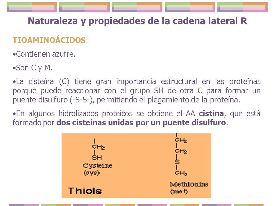 TIOAMINOÁCIDOS: Contienen azufre. Son C y M. La cisteína (C) tiene gran importancia estructural en las proteínas porque puede reaccionar con el grupo