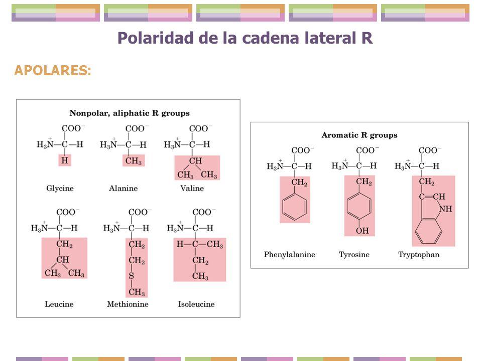 Polaridad de la cadena lateral R APOLARES: