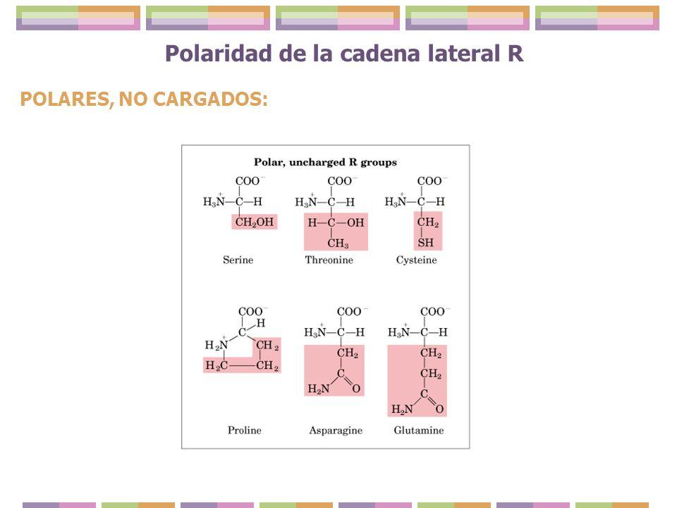 Polaridad de la cadena lateral R POLARES, NO CARGADOS: