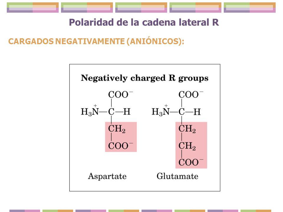 Polaridad de la cadena lateral R CARGADOS NEGATIVAMENTE (ANIÓNICOS):