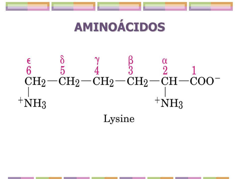 HIDROXIÁMINOACIDOS: Poseen un grupo alcohólico en su cadena lateral.