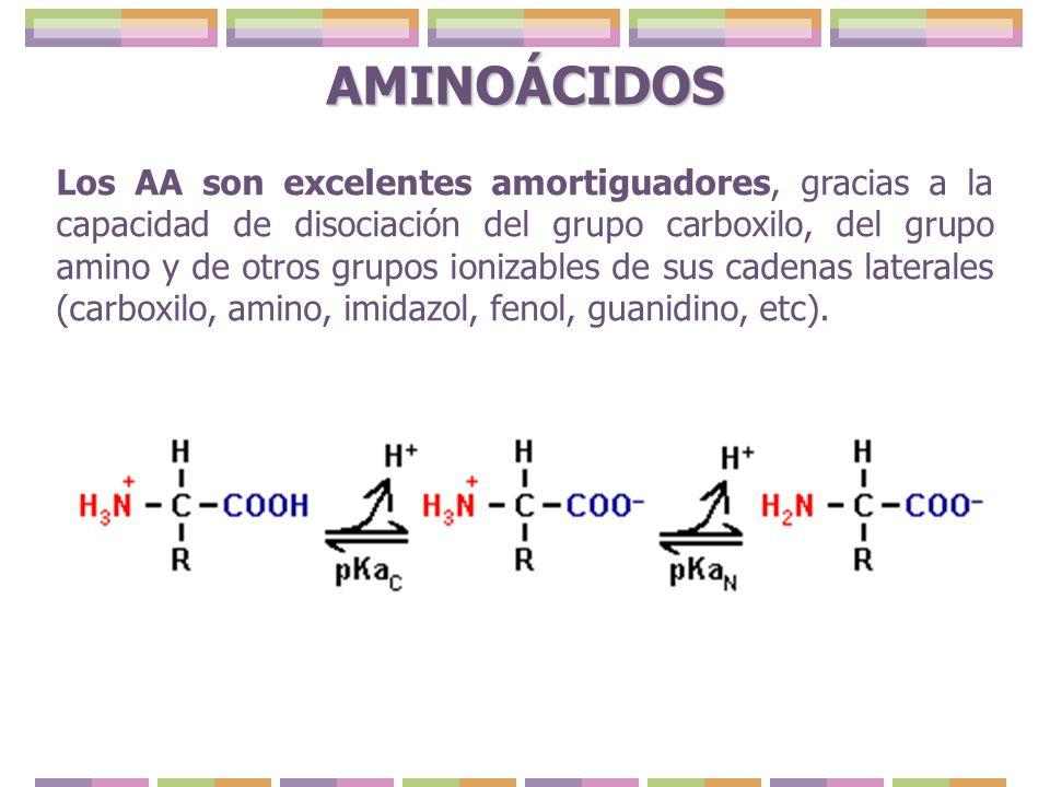 Los AA son excelentes amortiguadores, gracias a la capacidad de disociación del grupo carboxilo, del grupo amino y de otros grupos ionizables de sus c