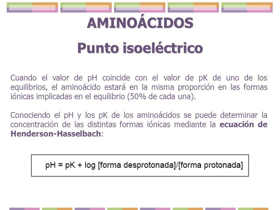 AMINOÁCIDOS Punto isoeléctrico Cuando el valor de pH coincide con el valor de pK de uno de los equilibrios, el aminoácido estará en la misma proporció