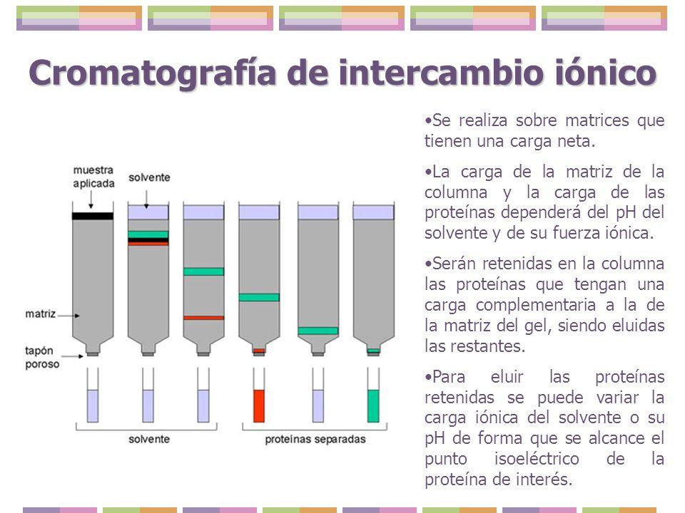 Cromatografía de intercambio iónico Se realiza sobre matrices que tienen una carga neta. La carga de la matriz de la columna y la carga de las proteín