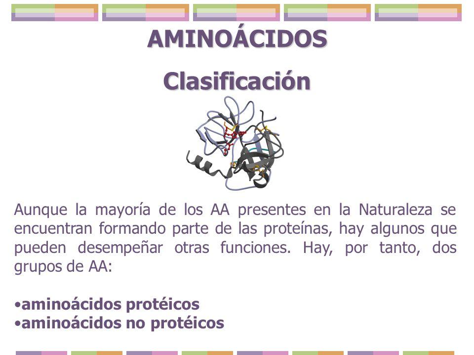 Los AA protéicos se dividen, a su vez, en dos grupos: aminácidos codificables o universales, que permanecen como tal en las proteínas.