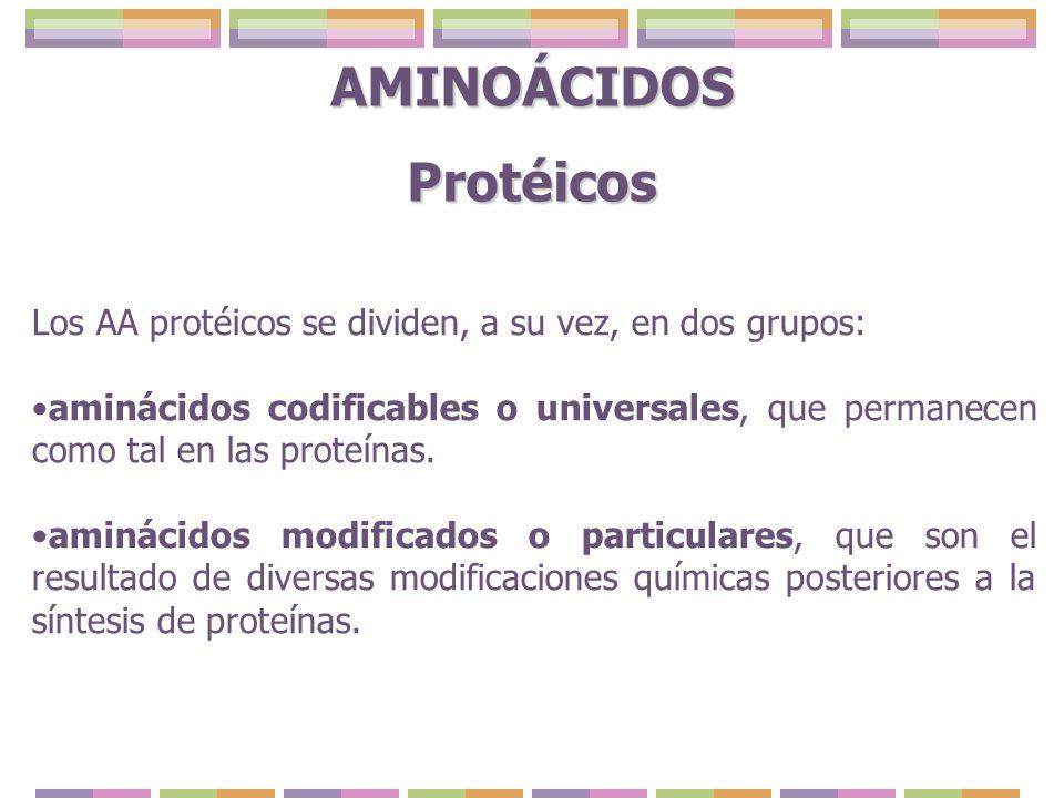 Los AA protéicos se dividen, a su vez, en dos grupos: aminácidos codificables o universales, que permanecen como tal en las proteínas. aminácidos modi