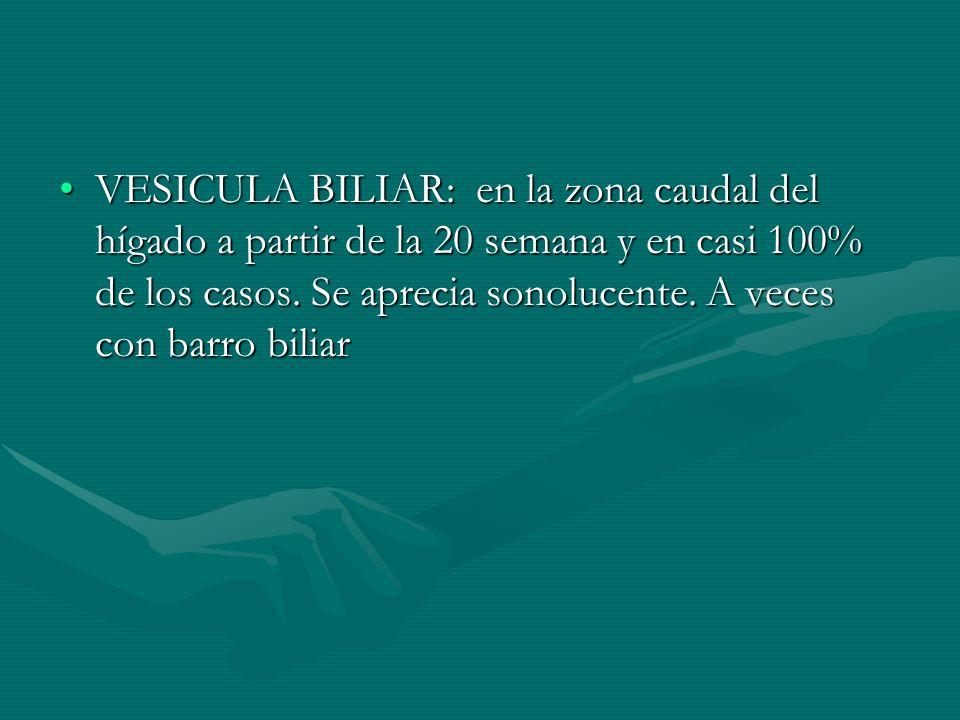VESICULA BILIAR: en la zona caudal del hígado a partir de la 20 semana y en casi 100% de los casos. Se aprecia sonolucente. A veces con barro biliarVE