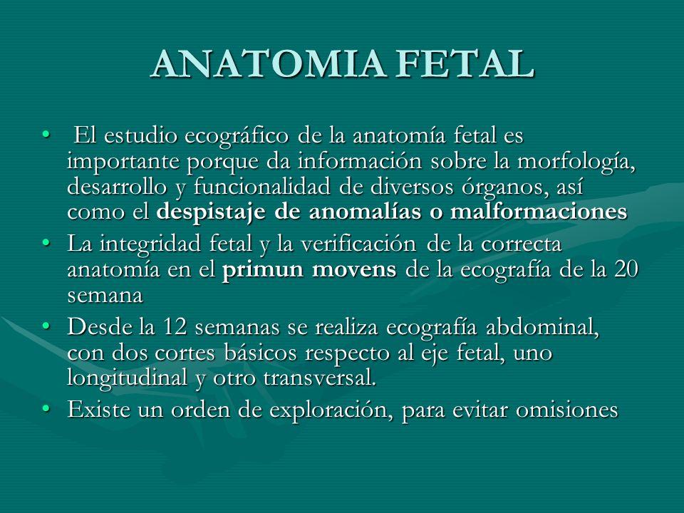 ANATOMIA FETAL El estudio ecográfico de la anatomía fetal es importante porque da información sobre la morfología, desarrollo y funcionalidad de diver