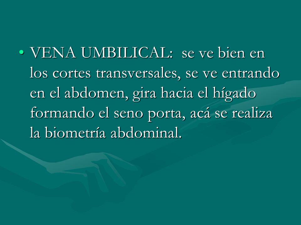 VENA UMBILICAL: se ve bien en los cortes transversales, se ve entrando en el abdomen, gira hacia el hígado formando el seno porta, acá se realiza la b