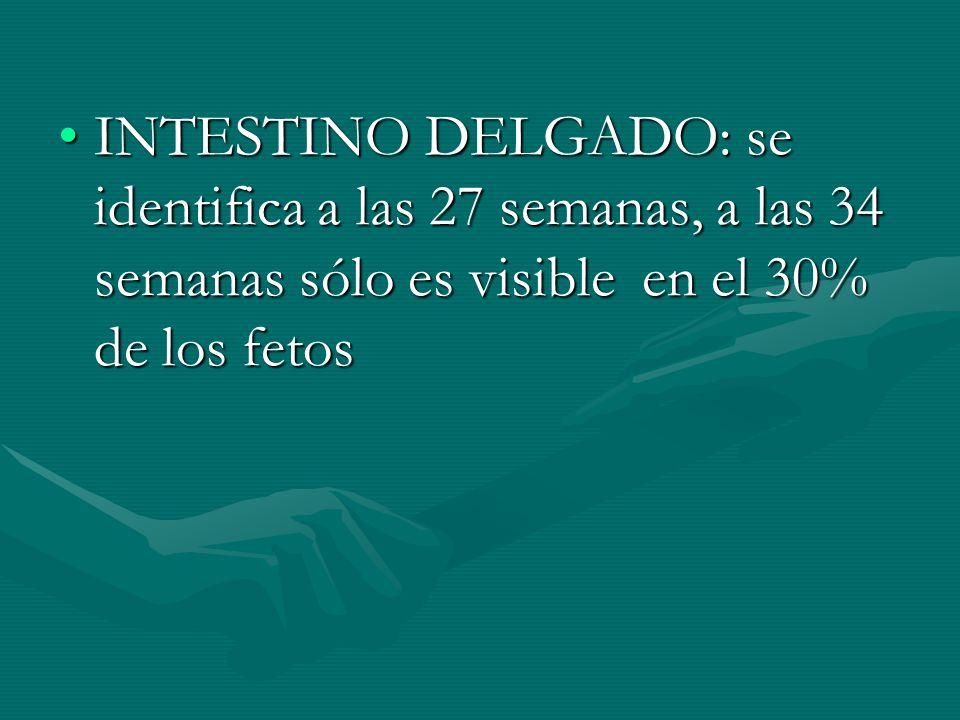INTESTINO DELGADO: se identifica a las 27 semanas, a las 34 semanas sólo es visible en el 30% de los fetosINTESTINO DELGADO: se identifica a las 27 se