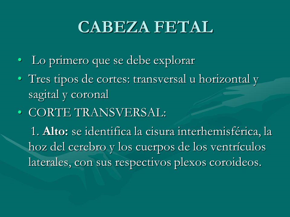 CABEZA FETAL Lo primero que se debe explorar Lo primero que se debe explorar Tres tipos de cortes: transversal u horizontal y sagital y coronalTres ti