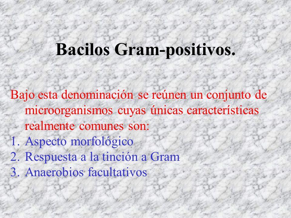 Bacilos Gram-positivos. Bajo esta denominación se reúnen un conjunto de microorganismos cuyas únicas características realmente comunes son: 1.Aspecto