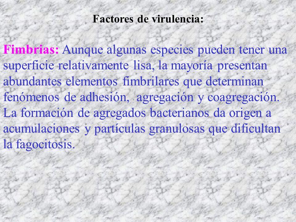 Factores de virulencia: Fimbrias: Aunque algunas especies pueden tener una superficie relativamente lisa, la mayoría presentan abundantes elementos fi