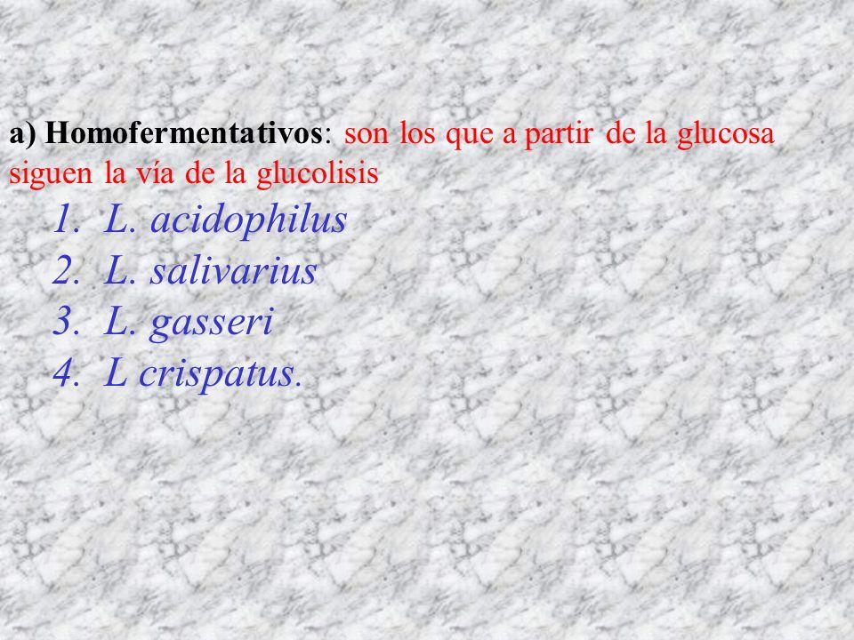 a) Homofermentativos: son los que a partir de la glucosa siguen la vía de la glucolisis 1. L. acidophilus 2. L. salivarius 3. L. gasseri 4. L crispatu