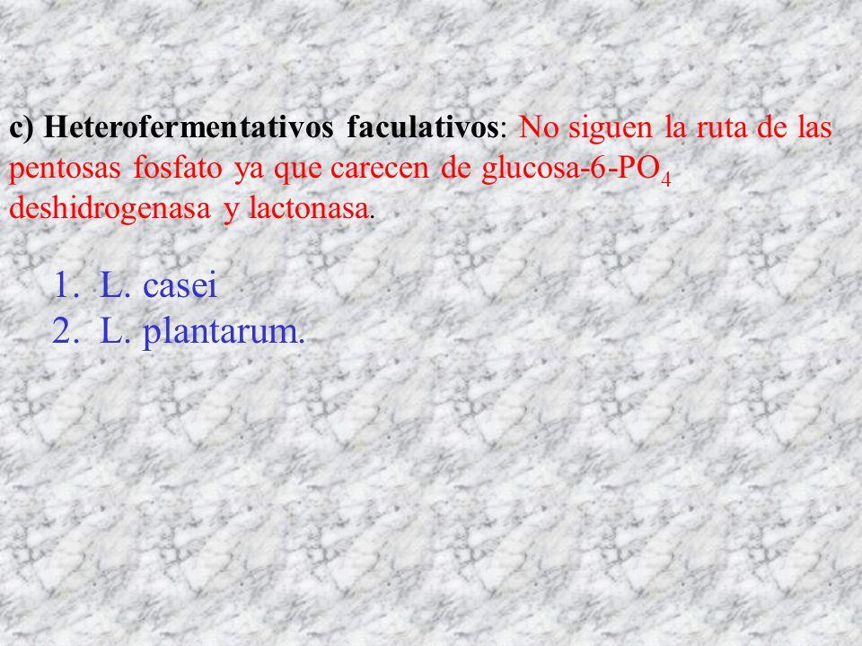 c) Heterofermentativos faculativos: No siguen la ruta de las pentosas fosfato ya que carecen de glucosa-6-PO 4 deshidrogenasa y lactonasa. 1. L. casei