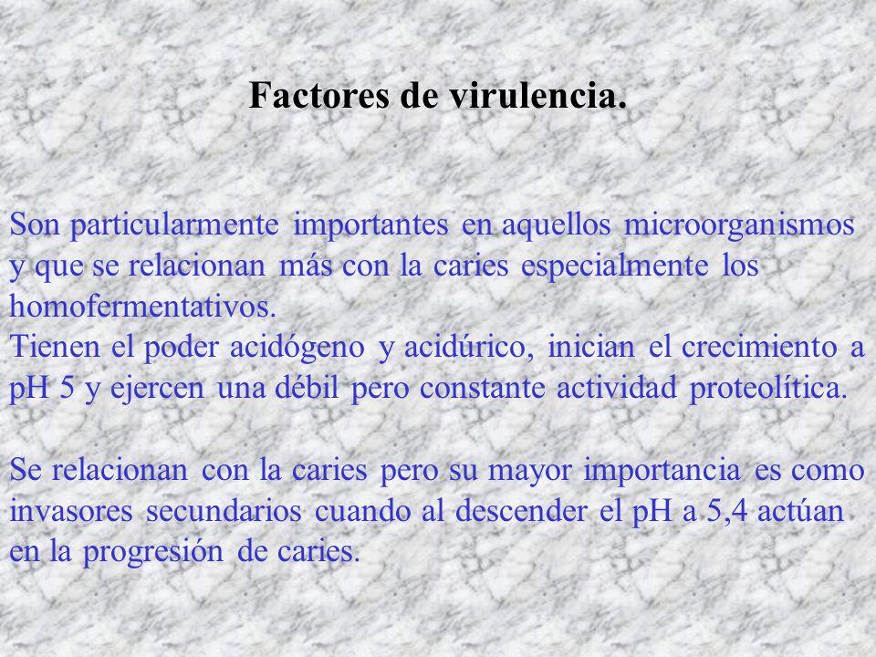 Factores de virulencia. Son particularmente importantes en aquellos microorganismos y que se relacionan más con la caries especialmente los homofermen