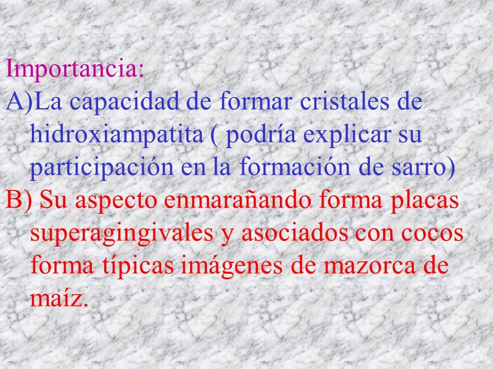 Importancia: A)La capacidad de formar cristales de hidroxiampatita ( podría explicar su participación en la formación de sarro) B) Su aspecto enmaraña