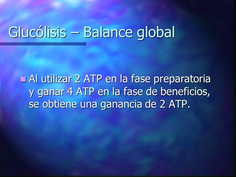 Glucólisis – Balance global Al utilizar 2 ATP en la fase preparatoria y ganar 4 ATP en la fase de beneficios, se obtiene una ganancia de 2 ATP. Al uti