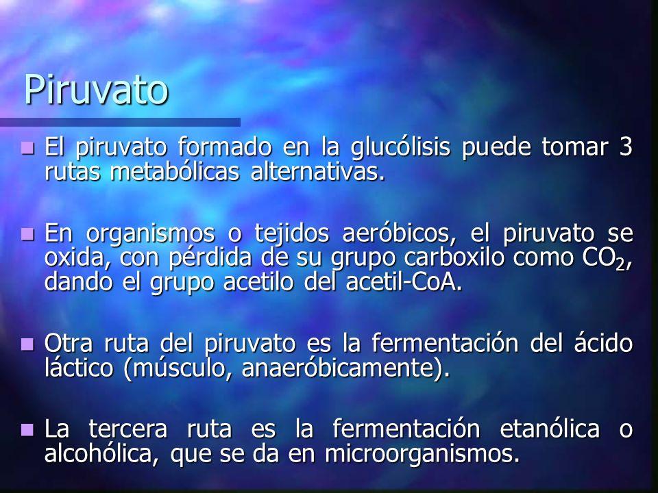 Piruvato El piruvato formado en la glucólisis puede tomar 3 rutas metabólicas alternativas. El piruvato formado en la glucólisis puede tomar 3 rutas m