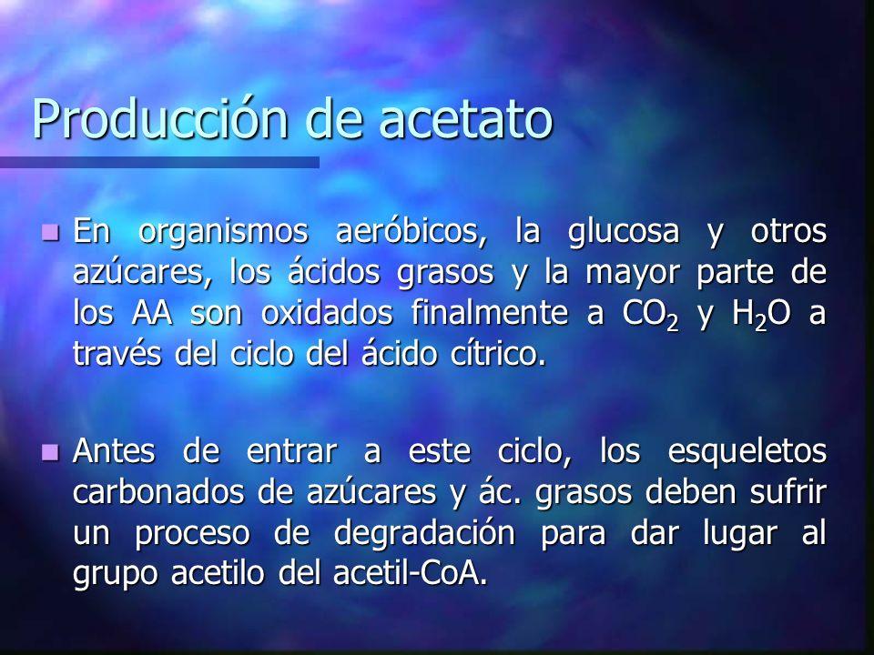 Producción de acetato En organismos aeróbicos, la glucosa y otros azúcares, los ácidos grasos y la mayor parte de los AA son oxidados finalmente a CO