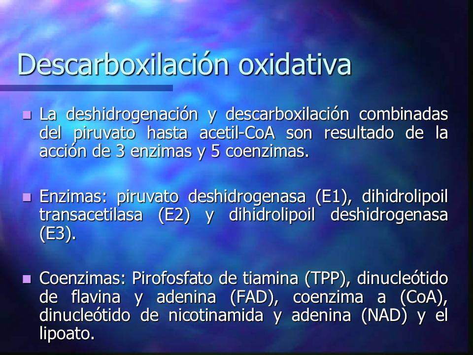 Descarboxilación oxidativa La deshidrogenación y descarboxilación combinadas del piruvato hasta acetil-CoA son resultado de la acción de 3 enzimas y 5