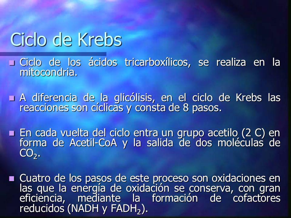 Ciclo de Krebs Ciclo de los ácidos tricarboxílicos, se realiza en la mitocondria. Ciclo de los ácidos tricarboxílicos, se realiza en la mitocondria. A