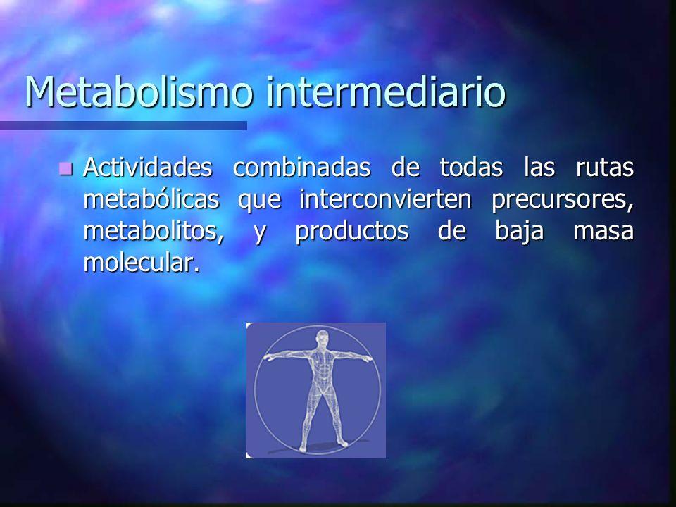 Metabolismo intermediario Actividades combinadas de todas las rutas metabólicas que interconvierten precursores, metabolitos, y productos de baja masa