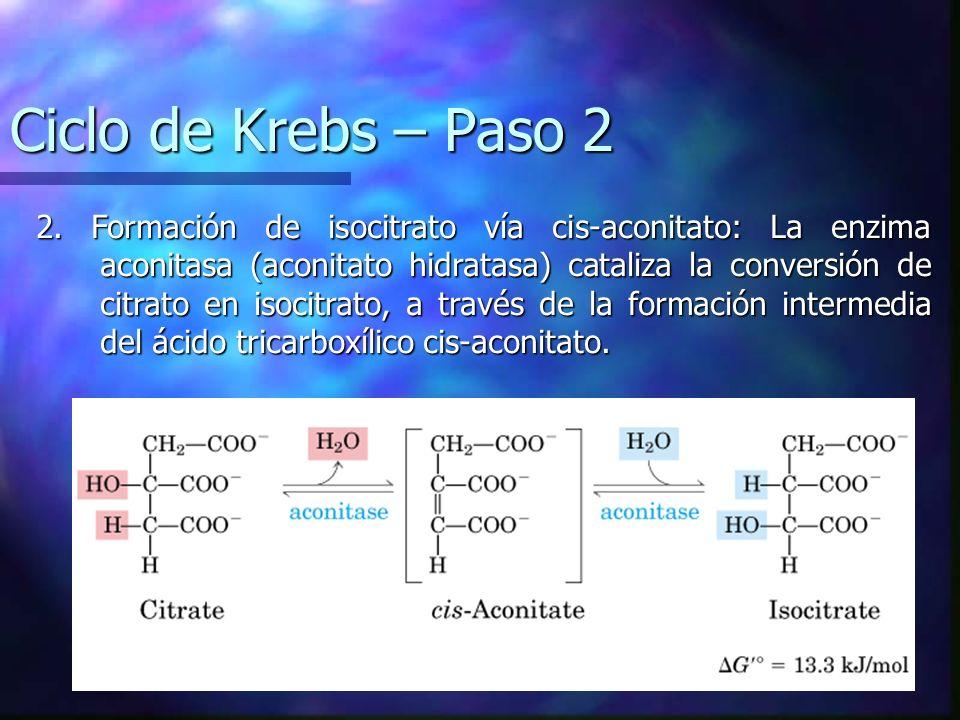 Ciclo de Krebs – Paso 2 2. Formación de isocitrato vía cis-aconitato: La enzima aconitasa (aconitato hidratasa) cataliza la conversión de citrato en i
