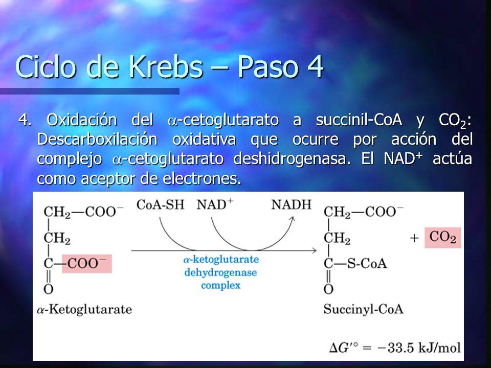 Ciclo de Krebs – Paso 4 4. Oxidación del -cetoglutarato a succinil-CoA y CO 2 : Descarboxilación oxidativa que ocurre por acción del complejo -cetoglu