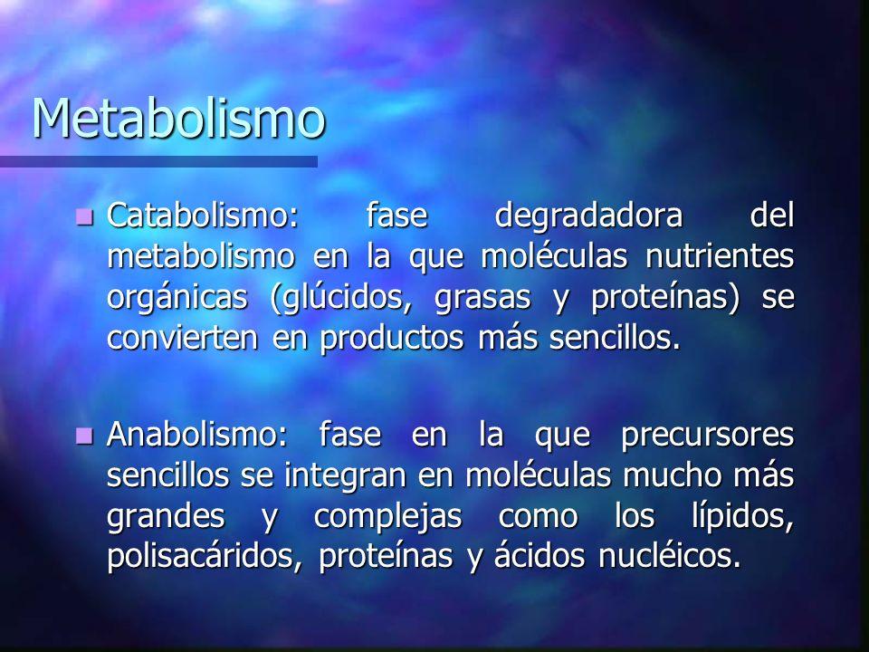Metabolismo Catabolismo: fase degradadora del metabolismo en la que moléculas nutrientes orgánicas (glúcidos, grasas y proteínas) se convierten en pro