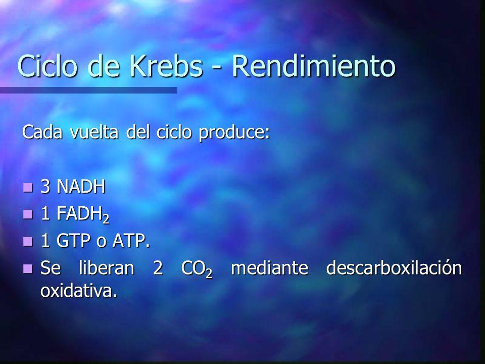 Ciclo de Krebs - Rendimiento Cada vuelta del ciclo produce: 3 NADH 3 NADH 1 FADH 2 1 FADH 2 1 GTP o ATP. 1 GTP o ATP. Se liberan 2 CO 2 mediante desca