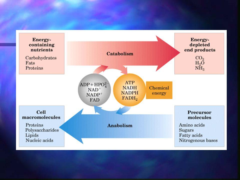 Reacciones biológicas de reducción-oxidación La transferencia de grupos fosfato es una de las características principales del metabolismo.
