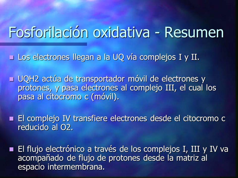 Fosforilación oxidativa - Resumen Los electrones llegan a la UQ vía complejos I y II. Los electrones llegan a la UQ vía complejos I y II. UQH2 actúa d