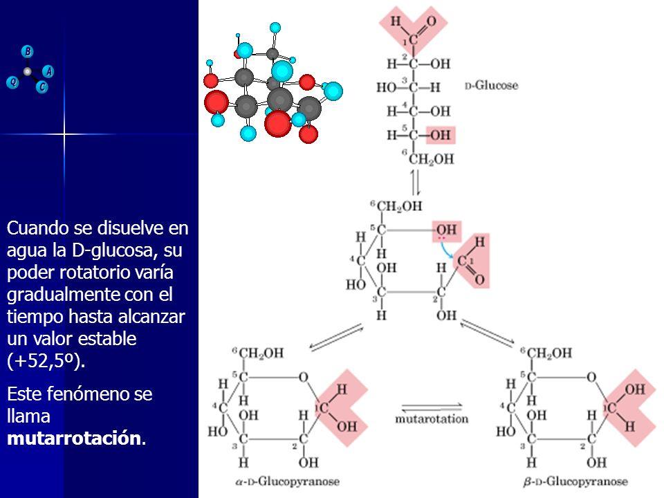 Cuando se disuelve en agua la D-glucosa, su poder rotatorio varía gradualmente con el tiempo hasta alcanzar un valor estable (+52,5º). Este fenómeno s