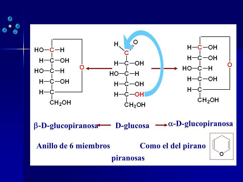 D-glucosa -D-glucopiranosa Anillo de 6 miembrosComo el del pirano piranosas