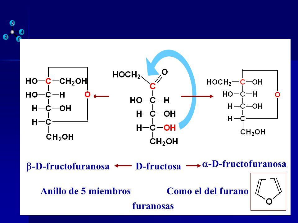 D-fructosa -D-fructofuranosa Anillo de 5 miembrosComo el del furano furanosas