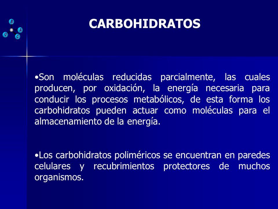 CARBOHIDRATOS Son moléculas reducidas parcialmente, las cuales producen, por oxidación, la energía necesaria para conducir los procesos metabólicos, d
