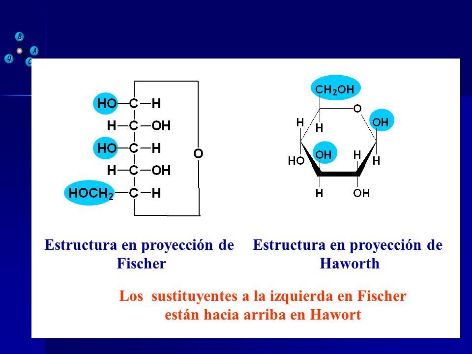 Estructura en proyección de Fischer Estructura en proyección de Haworth Los sustituyentes a la izquierda en Fischer están hacia arriba en Hawort