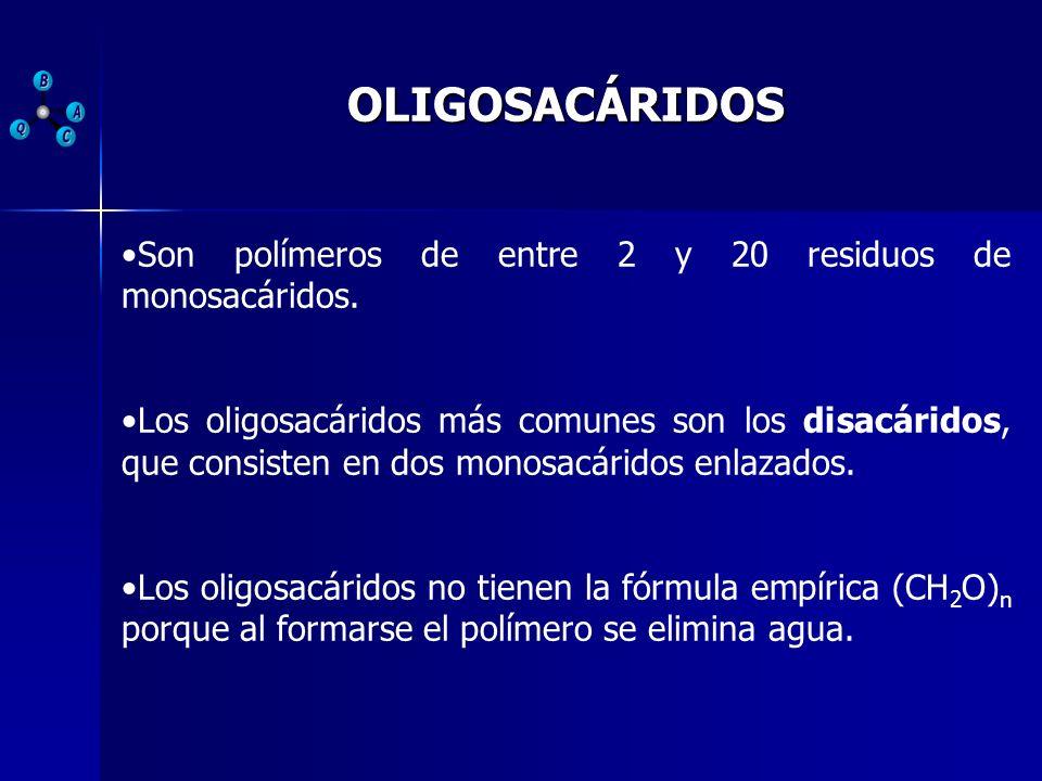 OLIGOSACÁRIDOS Son polímeros de entre 2 y 20 residuos de monosacáridos. Los oligosacáridos más comunes son los disacáridos, que consisten en dos monos