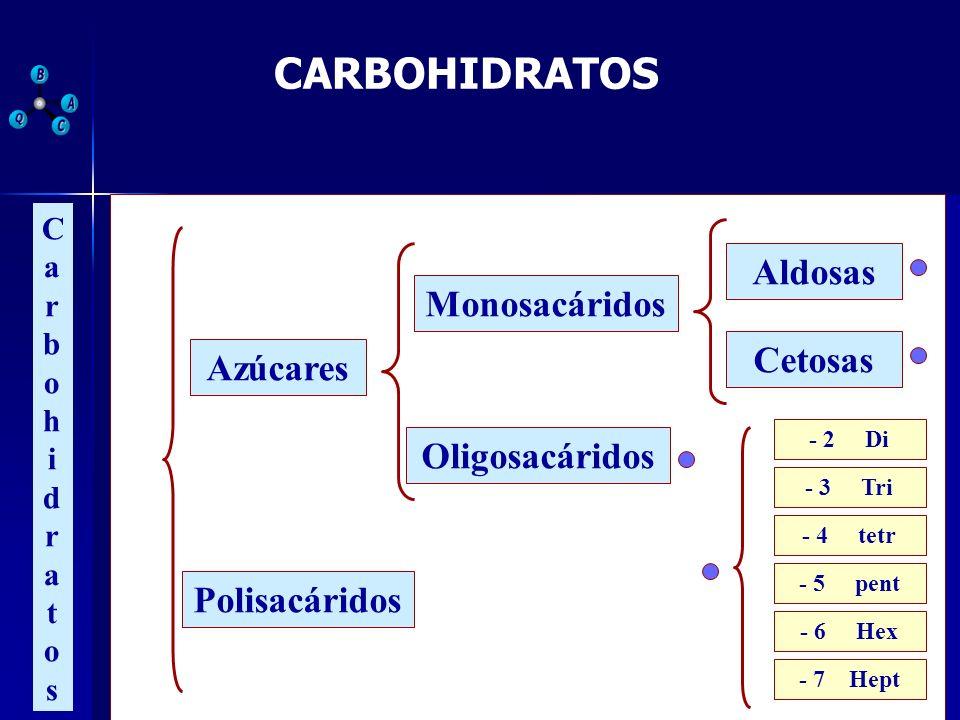 CARBOHIDRATOS CarbohidratosCarbohidratos Azúcares Polisacáridos Monosacáridos Oligosacáridos Aldosas Cetosas - 2 Di - 3 Tri - 7 Hept - 6 Hex - 5 pent