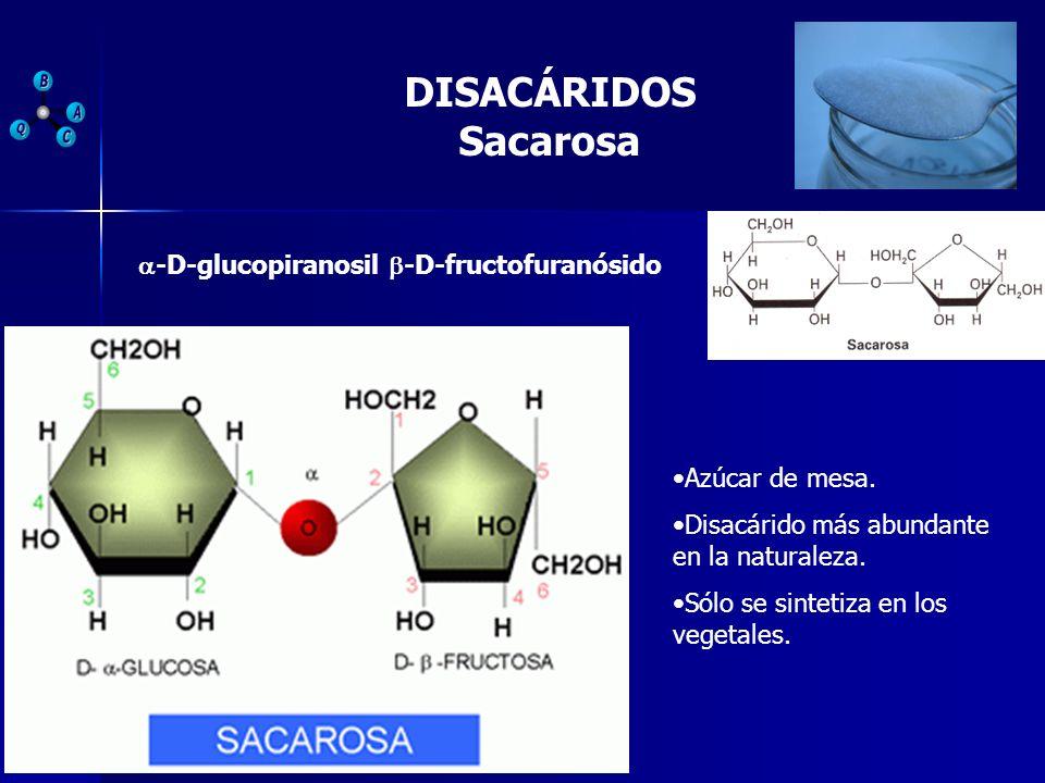 DISACÁRIDOS Sacarosa Azúcar de mesa. Disacárido más abundante en la naturaleza. Sólo se sintetiza en los vegetales. -D-glucopiranosil -D-fructofuranós