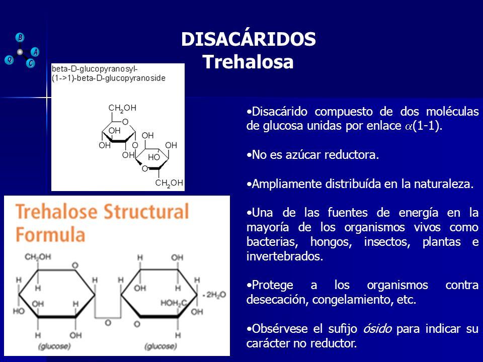 DISACÁRIDOS Trehalosa Disacárido compuesto de dos moléculas de glucosa unidas por enlace (1-1). No es azúcar reductora. Ampliamente distribuída en la