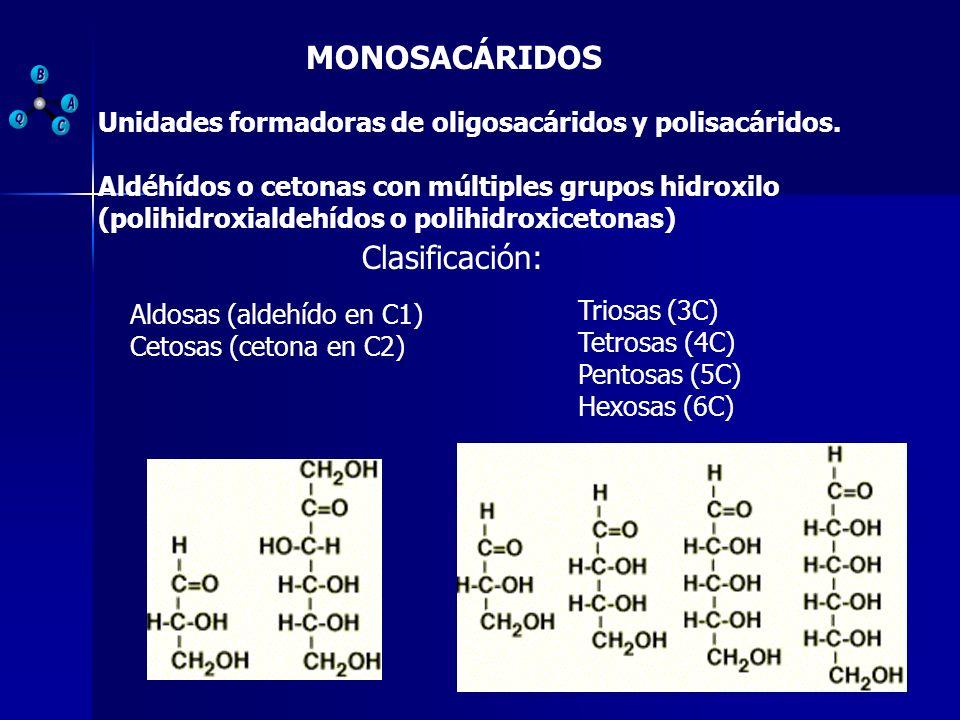 MONOSACÁRIDOS Aldéhídos o cetonas con múltiples grupos hidroxilo (polihidroxialdehídos o polihidroxicetonas) Unidades formadoras de oligosacáridos y p