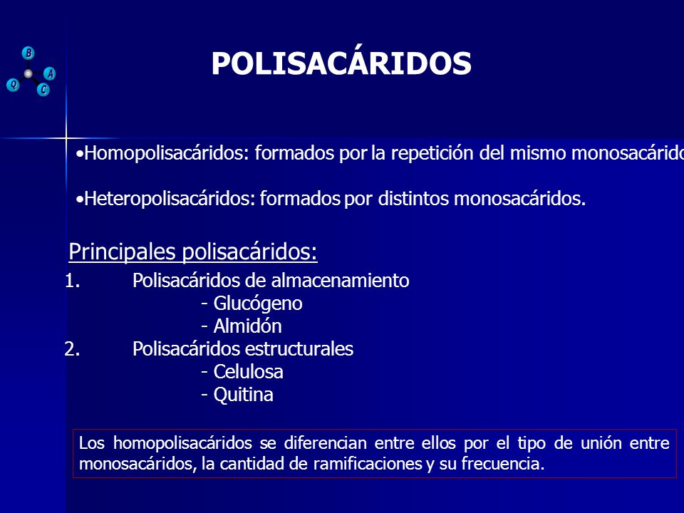 POLISACÁRIDOS Unión de más de 20 monosacáridos. 1.Polisacáridos de almacenamiento - Glucógeno - Almidón 2.Polisacáridos estructurales - Celulosa - Qui