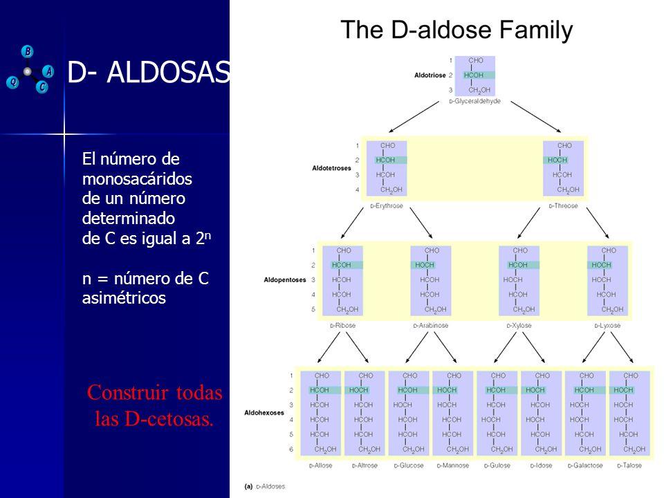 D- ALDOSAS El número de monosacáridos de un número determinado de C es igual a 2 n n = número de C asimétricos Construir todas las D-cetosas.