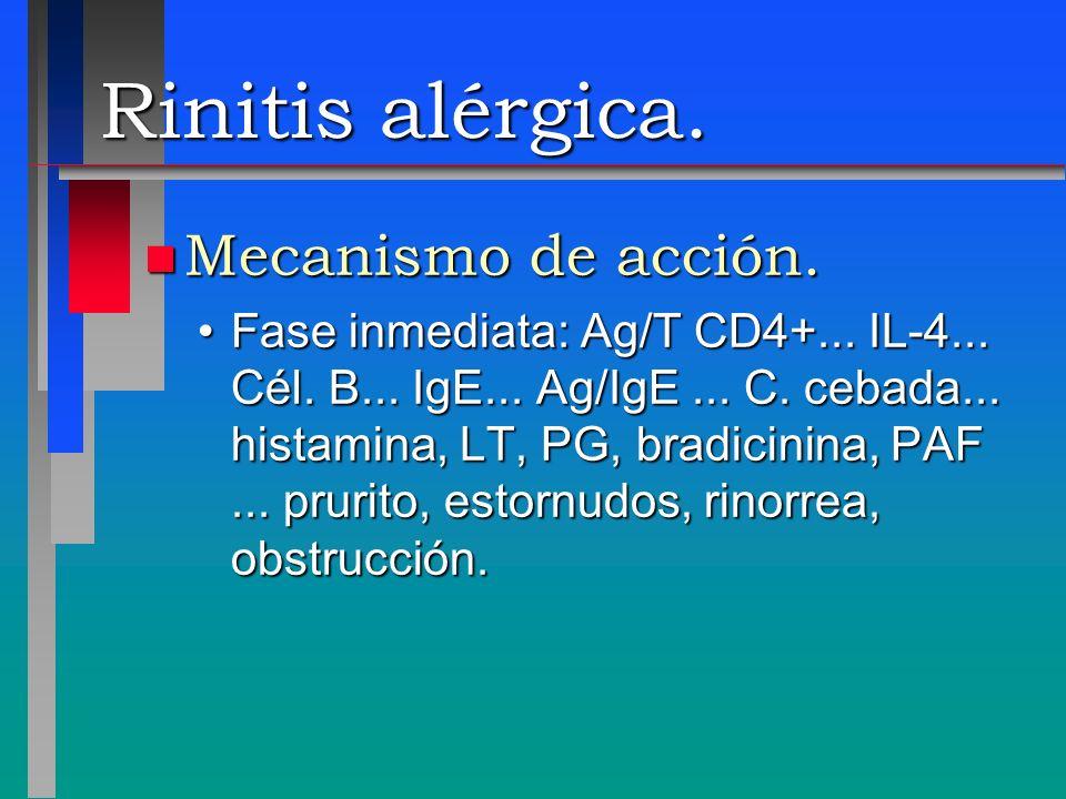Rinitis alérgica. n Mecanismo de acción. Fase inmediata: Ag/T CD4+... IL-4... Cél. B... IgE... Ag/IgE... C. cebada... histamina, LT, PG, bradicinina,