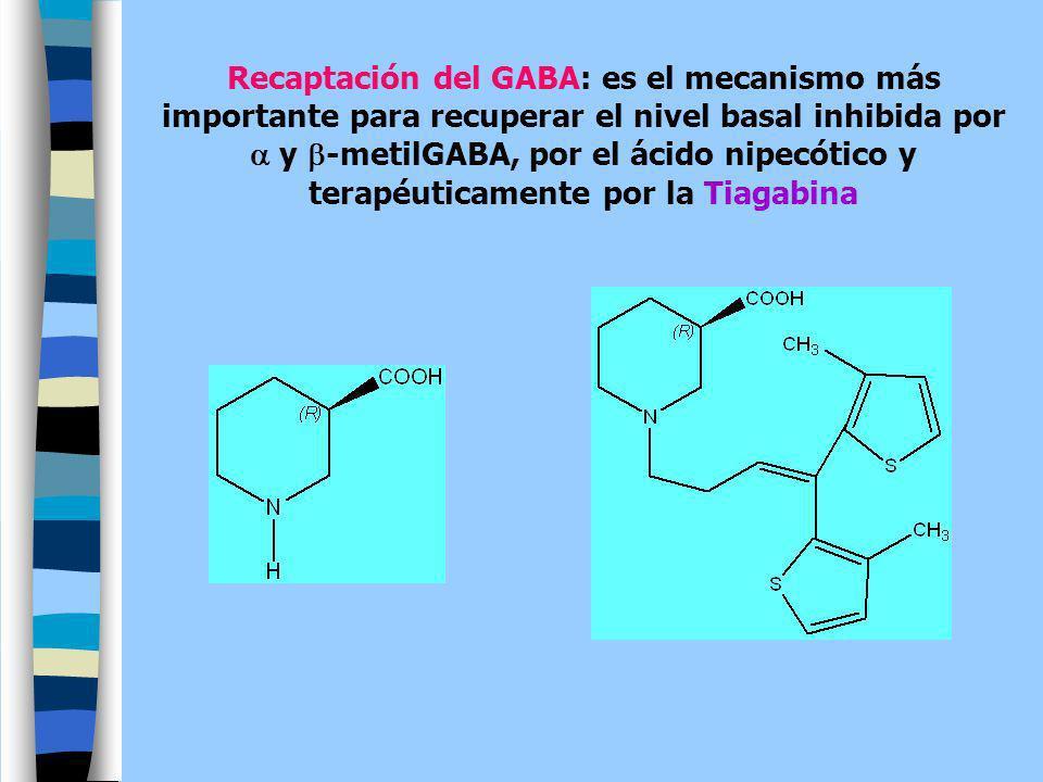 Recaptación del GABA: es el mecanismo más importante para recuperar el nivel basal inhibida por y -metilGABA, por el ácido nipecótico y terapéuticamen